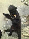 Bear Begging