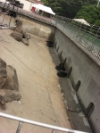 Bears lying in shade of wall