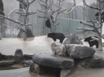 With no apparent food source, proper bedding or fresh water, these overpopulated pits are in dire need of improvement-as noted by our associates, the bears will huddle next to the wall for shade during summer seasons as the rocks provide too little shelter from sun