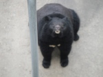A bear apparently begging for food