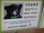 Bears are given Korean names, gender stated